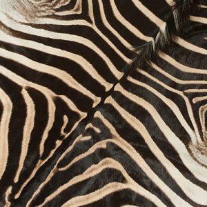 Zebra Skin Detail